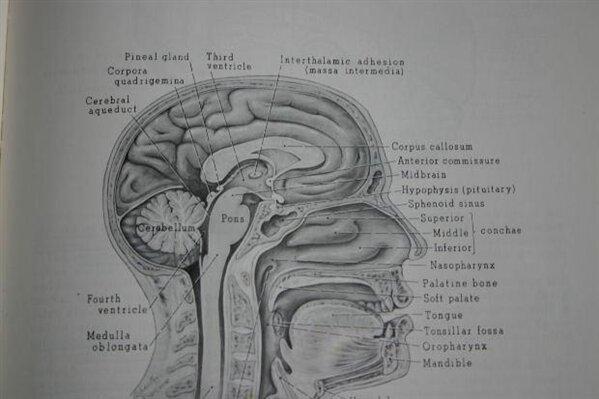 mémoire oubli cerveau