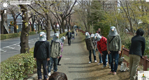 Street View Tokyo pigeons