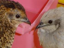 oiseaux love