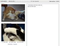 chatroulette avec des chats